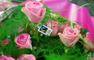 Plantion+promoot+fairtrade+rozen