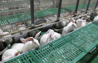 Dodelijke+konijnenziekte+rukt+op