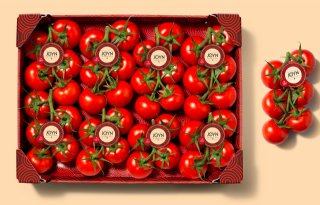 Smaakvolle+tomaat+Joyn+van+Looye+kwekers