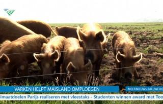 TV: varken helpt maisland omploegen