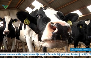 TV%3A+oude+koe+blijkt+krasse+knar