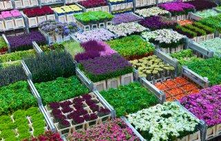 Vooral+Nederlandse+bloemen+bij+Engelse+en+Franse+bloemist
