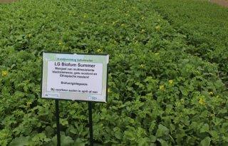 Biofumigatie valt tegen als grondontsmetter