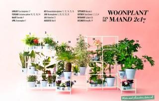 Ook in 2017 woonplanten van de maand