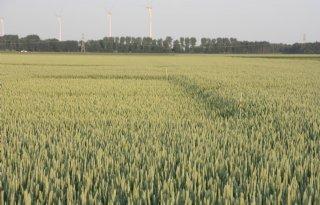 Kleine+stijging+tarweprijs+op+wereldmarkt