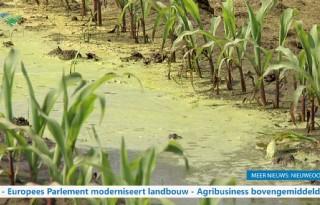 TV: Wateroverlast kost boer miljoenen