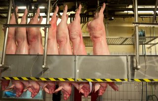 ABN Amro voorspelt deling varkenshouderij