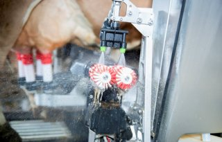 Sensoren+helpen+melkveehouder+vooruit