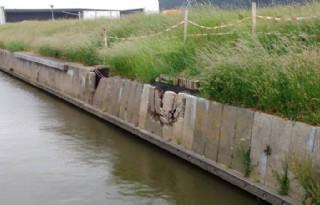 Japanse duizendknoop ondermijnt dijk