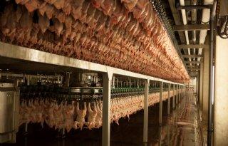 Plukon+neemt+Franse+pluimveevleesproducent+DUC+over