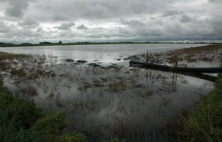 Onderzoek+naar+effect+inundatie+op+maiswortelknobbelaaltjes