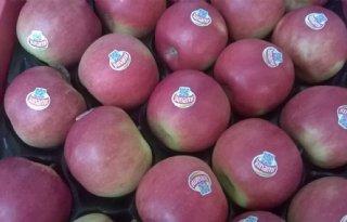 Fruitsector wil actie Van Dam boycot Rusland