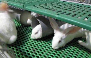 Prijzen+konijnen+week+7