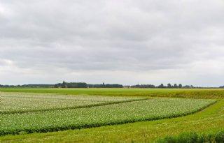 Goeree%2DOverflakkee+zet+agrarische+koers+uit