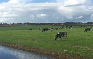 Boeren Schiermonnikoog gaan extensiveren