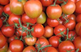 Rijk Zwaan start proef belichte tomatenteelt