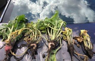 Getroffen boeren kunnen 'overmacht' melden