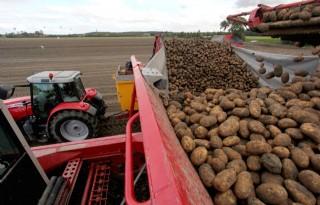 Farm+Frites+zoekt+uitbreiding+vooral+in+bewaarsegment