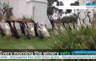 TV: Wijnboer laat loopeenden los