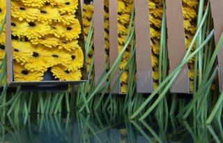 Lagere+bloemenprijs+drukt+omzet+FloraHolland