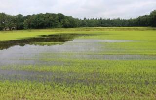 Boeren+willen+koerswijziging+waterschap+De+Dommel