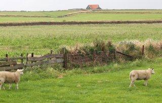 Lodders op de bres voor Texelse tuinwal