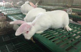 Minder kalkoenen-, eenden- en konijnenhouderijen