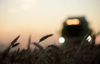 Wereldwijde graanoogst naar 2,1 miljard ton