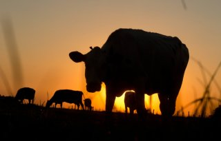 Saldo melkveehouderij daalt