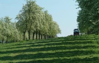 Hoogstamboomgaard+voortaan+geregistreerd+als+grasland