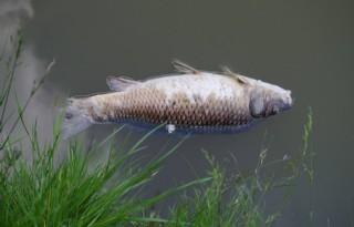 Defecte luchtwasser oorzaak vissterfte