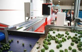 Kiwibes op maat gesorteerd door nieuwe installatie