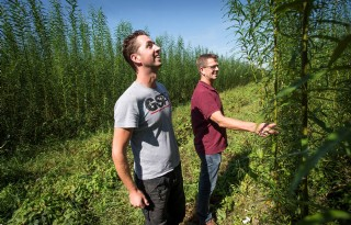 Biomassawilg maakt uitstekende groeistart