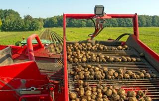 Aardappelorganisaties+zoeken+draagvlak+voor+landelijke+fritesnotering