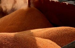 Egypte+stelt+strengere+eisen+aan+kwaliteit+tarwe