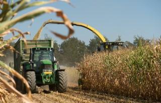 Maisplanten sterven nogal eens af
