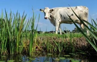 Fosfaatrecht is meer dan koehandel