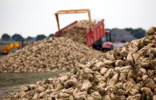 Brussel+onderzoekt+gevolgen+van+einde+suikerquotum
