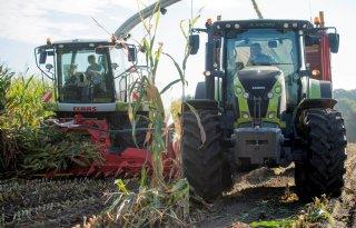 Belgische mais weinig aangetast door mycotoxines