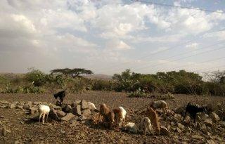 FAO%3A+%27350+miljoen+dollar+nodig+voor+aanpak+coronahonger%27