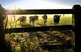 FrieslandCampina+legt+klimaatlat+voor+leden+steeds+hoger