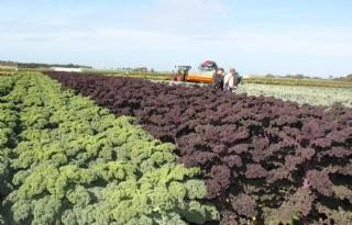 Hybride+knolselderij+en+roosjes+broccoli