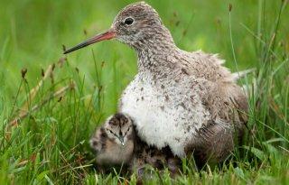 Gelders+actieplan+voor+weidevogels
