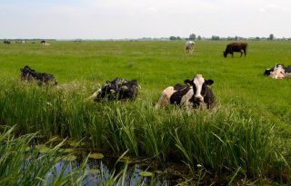 300+hectare+onderwaterdrainage+in+Meijepolder
