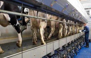 Eerste+koeien+drachtig+bij+proef+over+doormelken