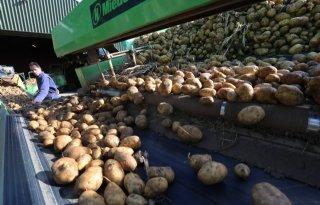 Aviko+Potato+schrapt+kwaliteitskorting+contractaardappelen
