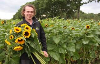 KMB Flowers levert zonnebloemen in vier maten