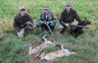 Jagers: meer broedgebieden en minder roofdieren