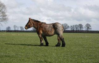 Dierenbescherming+vreest+gesjoemel+paardenexport