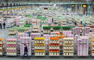 FloraHolland+verhandelt+300+miljoen+Valentijnsbloemen